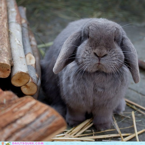 Bunday bunny disapproving guarding sticks