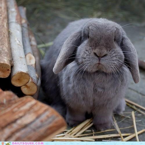 Bunday bunny disapproving guarding sticks - 6157927936