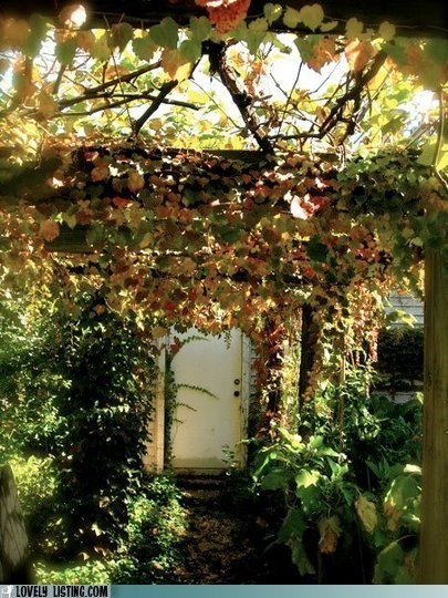 arbor,door,leaves,tunnel,vines