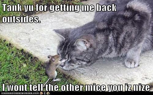 cat mouse nice patio - 6158330624