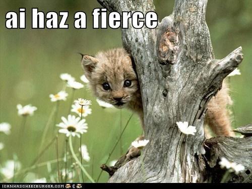 baby animals cute fierce lynx - 6158353920