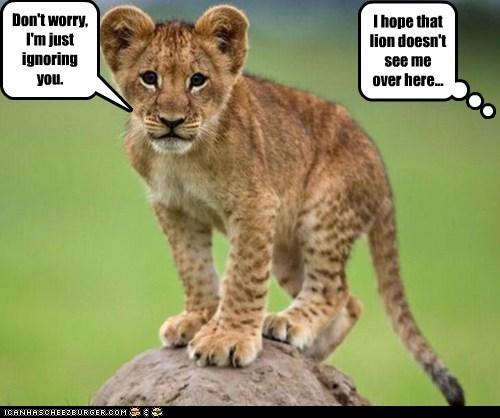 Focused Lion Cub