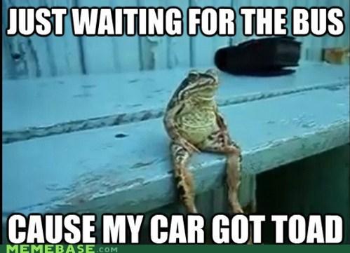 car,frog,hop,Memes,puns,toad