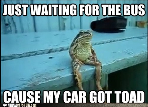 bench,bus,car,frog,puns,sitting,towed,waiting