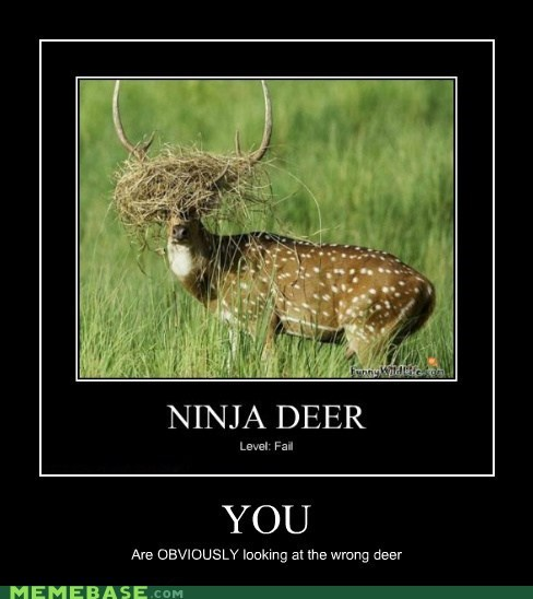 deer hilarious wrong looking wtf - 6159328768