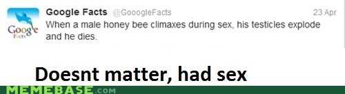 bees,doesnt matter,not a repost,sex,Text Stuffs,you guys are dummies