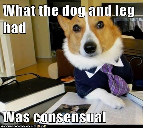 Lawyer Dog - 6159812096