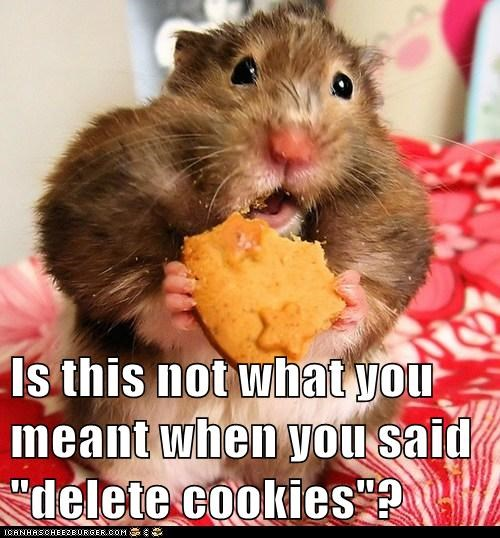 best of the week,cookies,delete,eating,Hall of Fame,hamster,hamsters,internet,misunderstanding,treats,trying to help