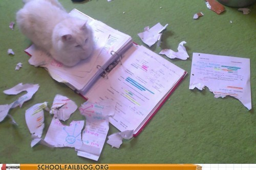 blame it on the dog cat ate my homework not the dog - 6160585728