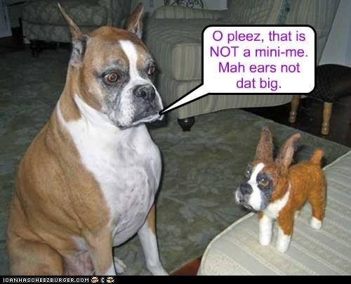 O pleez, that is NOT a mini-me. Mah ears not dat big.