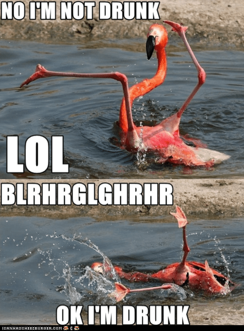 alcohol birds drinking drowning drunk flamingo flamingos water - 6161041920