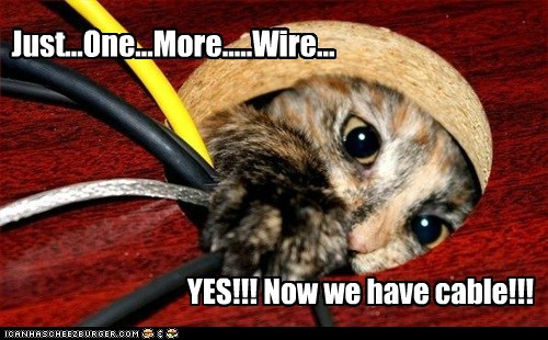 Cheezburger Image 6161157888