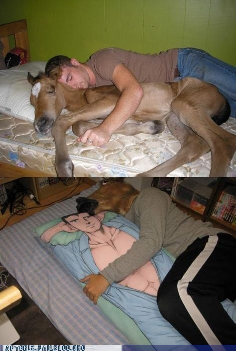 bed,horse,Pillow,sleeping