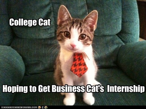 College Cat Hoping to Get Business Cat's Internship
