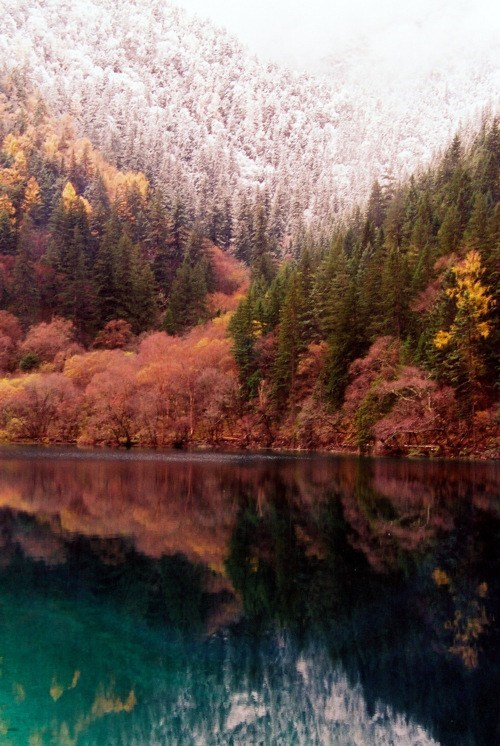 China,Forest,lake,trees