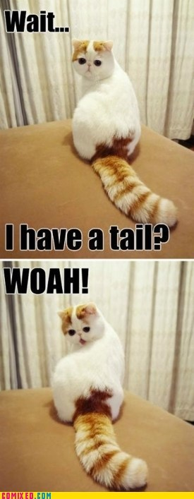 animals best of week cat cute tail woah