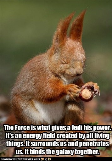 best of the week food galaxy Hall of Fame Jedi levitating nut nuts obi-wan kenobi speech squirrel squirrels star wars the force