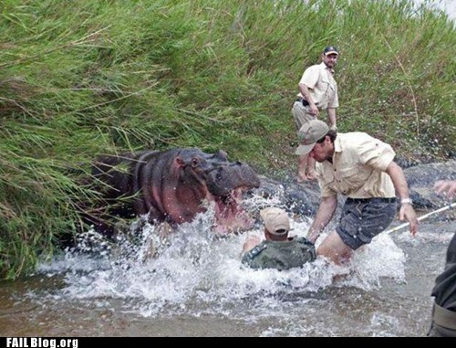 animal attack hippo river - 6161641216