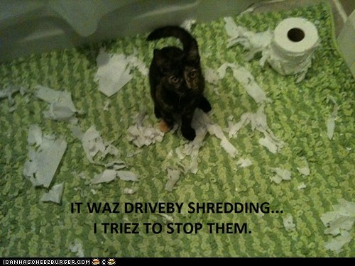 bathroom best of the week Cats destroy drive by excuse Hall of Fame lie lies mess shred stop toilet paper - 6161942272