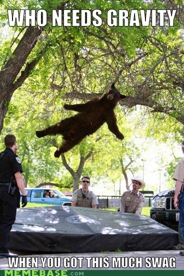 bear,Gravity,helium,Memes,swag,trampoline