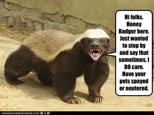 Hi folks. Honey Badger here. Just wanted to stop by and say that sometimes, I DO care. Have your pets spayed or neutered.