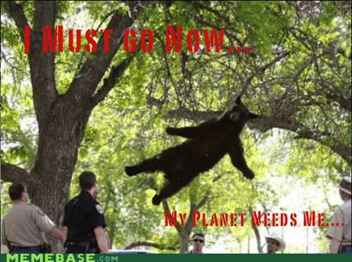 bear,East Coast Douchebag,i must go,Memes,my planet needs me
