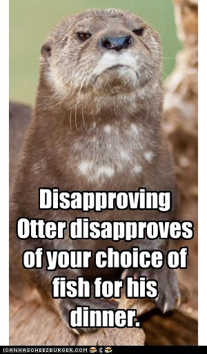 angry,annoying,complaining,dinner,disapproving,fish,otter