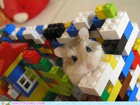 building,fort,hamster,legos
