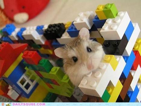 building fort hamster legos - 6162731776
