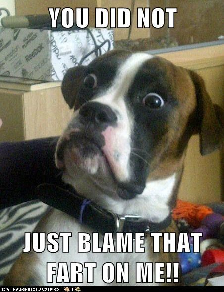 Baffled Boxer blame dogs farting farts Memes - 6163594752