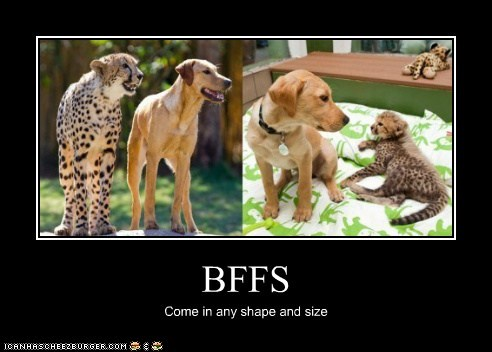 BFFS Come in any shape and size