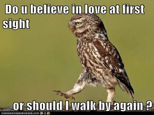 believe,love at first sight,Owl,pickup lines,strut,walk