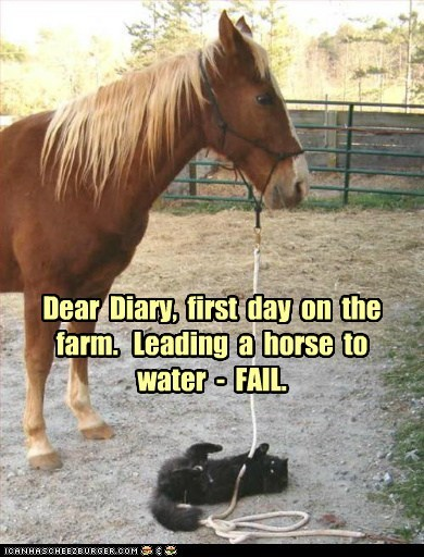 Dear Diary, first day on the farm. Leading a horse to water - FAIL.