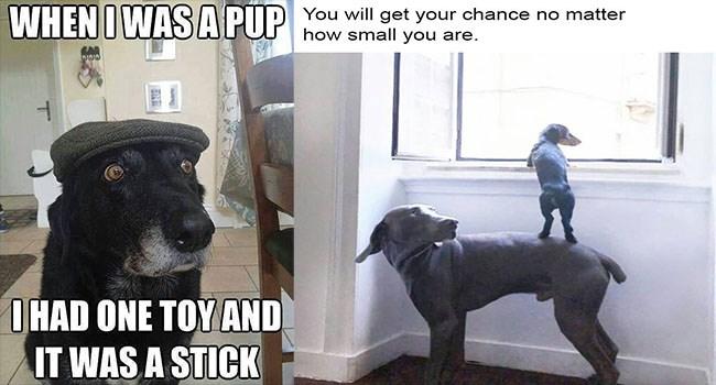 dogs dog memes funny memes Memes - 6164741