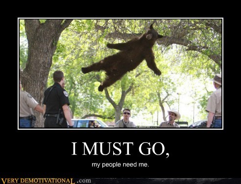 bear,flying,hilarious,superhero