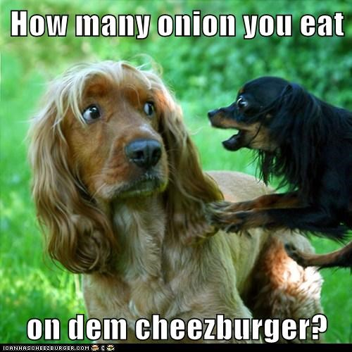 Cheezburger Image 6164968960