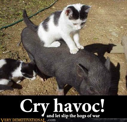 animals,cat,cry havoc,dogs of war,hogs,Pure Awesome