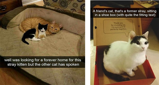 lolcats wholesome snapchat lolz cat pictures cute cute cats lol Cats funny cat memes - 6164997