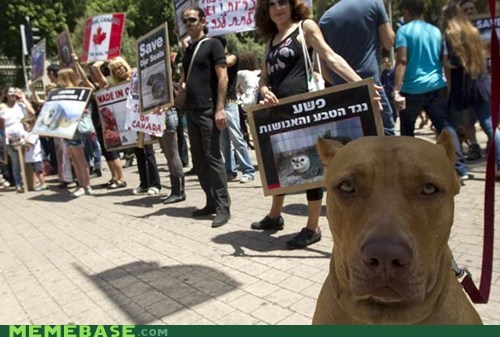 Animal Bomb animals Canada do Protest security