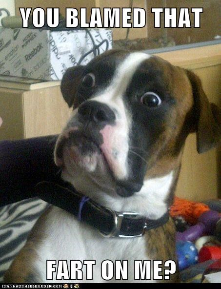 Baffled Boxer dumbstruck dog fart gross Memes - 6165100032