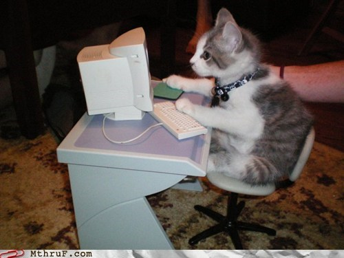 Cats desk kitten kitty phishing