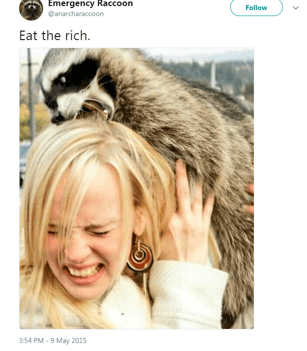radical anarchist tweets raccoons - 6165253