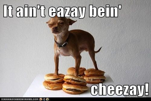 Cheezburger Image 6165274624