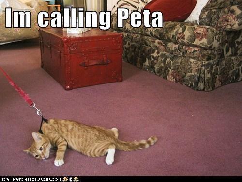 carpet leash no outside peta walk - 6165439488