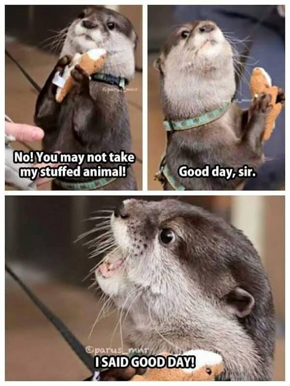 aww cute otters Memes tweets animals - 6165509