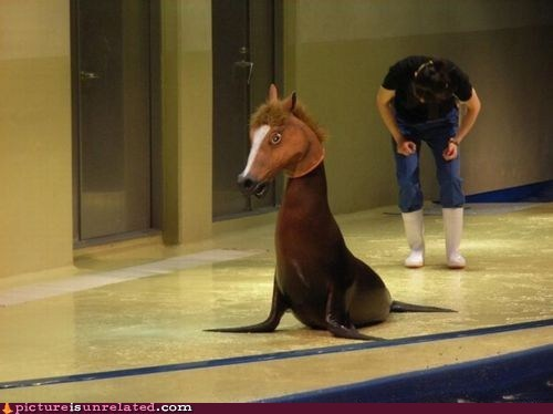 animal,animal-non-human,cosplay,horse head,seal,wtf