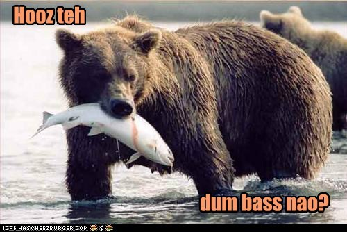 bass bear caught dumbass fish fishing puns wordplay - 6165893888