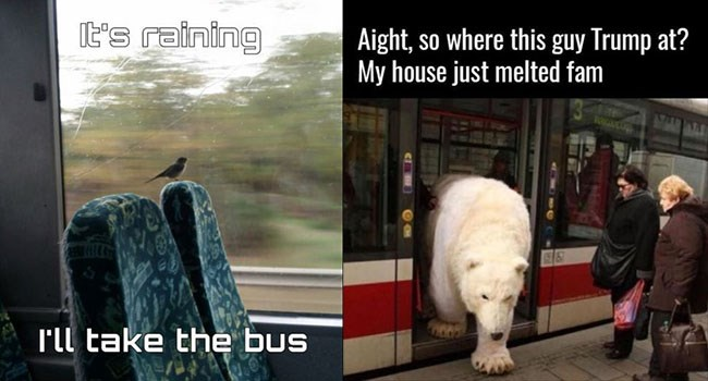 public bus animals - 6166021
