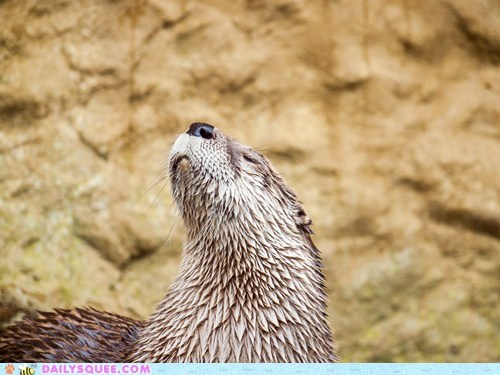 fur no otter otters squee wet - 6166091264