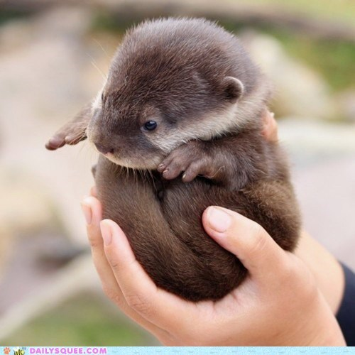 baby ball game Hall of Fame otter squee